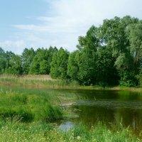 Зеленое лето. :: Чария Зоя