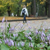 Осенние цветы :: Света Чубук