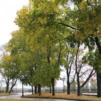 Осень в Чернигове :: Света Чубук