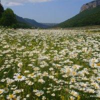 цветы мангупа :: юрий шалыгин
