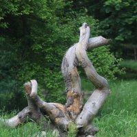 Осьминог (парковая деревянная разновидность), дальний родственник знаменитого осьминога Пауля :: Vladimir 070549
