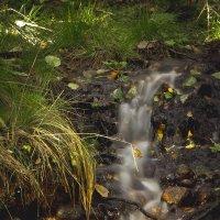 Лесной ручей :: Андрей Павлов