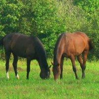 Кони, кони — вы сказка и песня... :: Galina Leskova