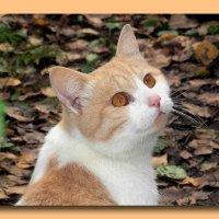 Портрет Персика. Осень :: Алла Захарова