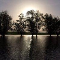 Деревья в воде :: Renat Adzhigotov