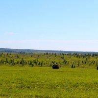 Летние пейзажи :: Татьяна Ломтева