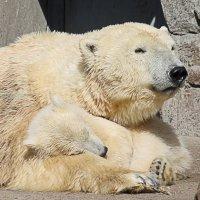 Мама с медвежонком :: Вера Моисеева