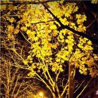 Ночь, осень :: Николай Фролов
