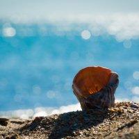Морская раковина... :: sergey demidov