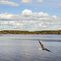 Чайки над озером :: Valerii Ivanov