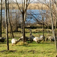 У озера на травке в январе... :: Тамара (st.tamara)