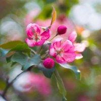Нежная весна :: Анастасия Шаронова