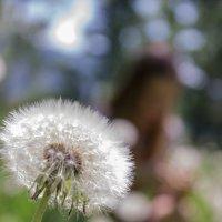 весна... :: Светлана Сироткина