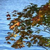Осень в Петергофе :: Ольга Русанова (olg-rusanowa2010)