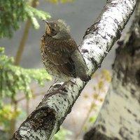 Первый вылетел из гнезда :: Domna Kuznechic