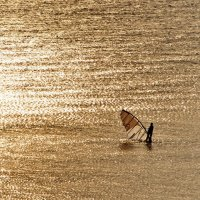 вечернее золото :: Ingwar