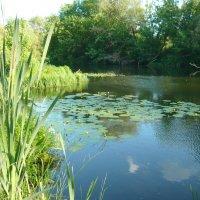 Ах, река, река родная... :: Антонина Балабанова
