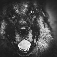 волк дома :: Diggleby Monk