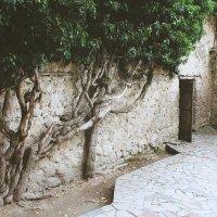 вход в запретный сад :: Silina Winter