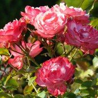 Цветы в нашем саду (этюд 2) :: Константин Жирнов