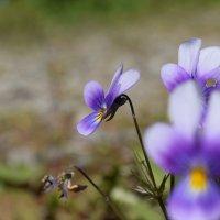 Цветы :: Илья Намаконов