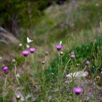 Прованские травы :: Алла Панасенко