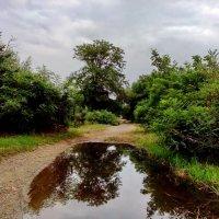 дождливый июль :: Алексей Меринов