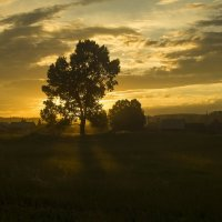 Дерево на закате :: Вадим Губин