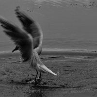 танец духам охоты :: Дмитрий Бубер