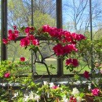 Весна в Ботаническом саду :: Александр