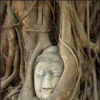 Голова Будды в корнях дерева :: Наталия Григорьева