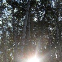 Солнце :: Анатолий
