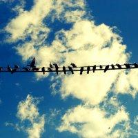 Птицы МИРА :: Лиза Игошева