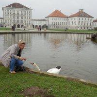 Лебеди Мюнхена :: Мила