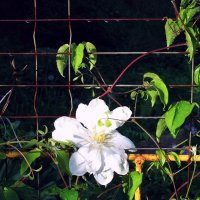 Майский цветок :: Евгения Мартынова
