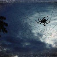 Ночной охотник. :: Августина Ли