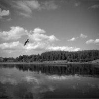 Рождённый летать :: Анна Кудрявцева