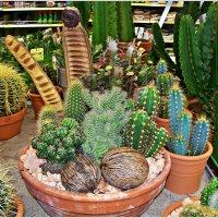 Композиция из кактусов. :: Валерия Комова