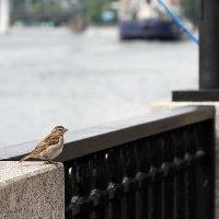 И птичке нужен променад :: толик токарев