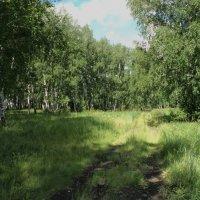 Солнечный день в лесу :: Domna Kuznechic
