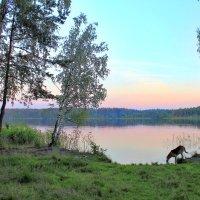 На озере :: Сергей Ильин