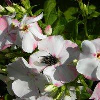 .... казус на цветке :: Виктория Шпагина