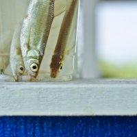 Ловля рыбы пакетом :: Ольга Попова