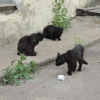 Банда :: Кот Kot
