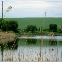 Зеркальный пруд... :: Тамара (st.tamara)