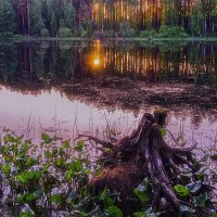 Лесное озеро :: DeDa_Anry Volchin