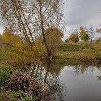 Бобровая плотина... :: Дмитрий Гортинский