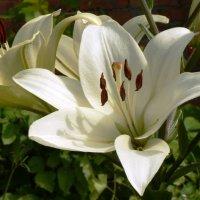 магическая красота белого :: Мария Климова