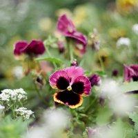 цветы на лужайке :: Лена Исаева
