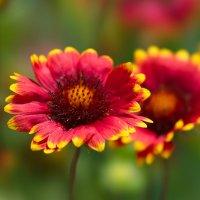 Цветок :: Александр Пронь